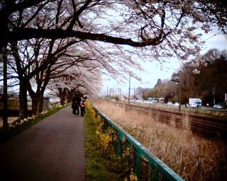 VQ1015で桜 その2