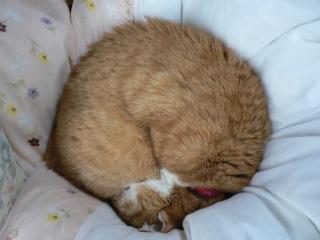 猫ロール2009